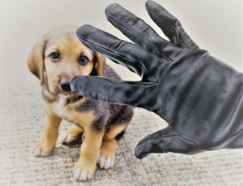 THE PUPPYNAPPERS Drug dealers are turning to dog theft after the price of puppies soared during lockdown